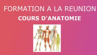 Cours d'anatomie